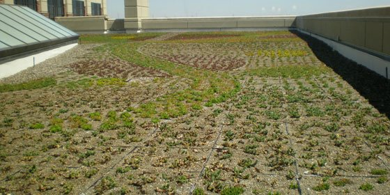GRT3 Modular Green Roof Trays
